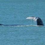 Temporada de visitação das baleias
