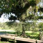 Passeio Ecológico: Parque Caieira em Joinville