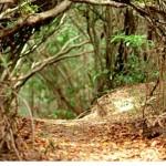 Feriado com um pé na trilha