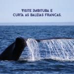 Visite Imbituba e curta as Baleias Francas.